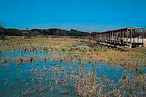depuracion de aguas residuales en la albufera
