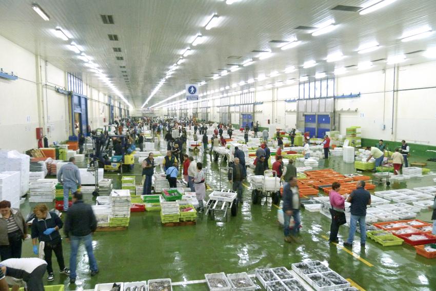 Las navajas y el mundo del molusco bivalvo | De compras online